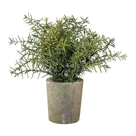 Gasper Dekokräuter Thymian Dekopflanze naturgetreu pflegeleicht mediterran langlebig Zementtopf